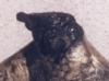 Torroador